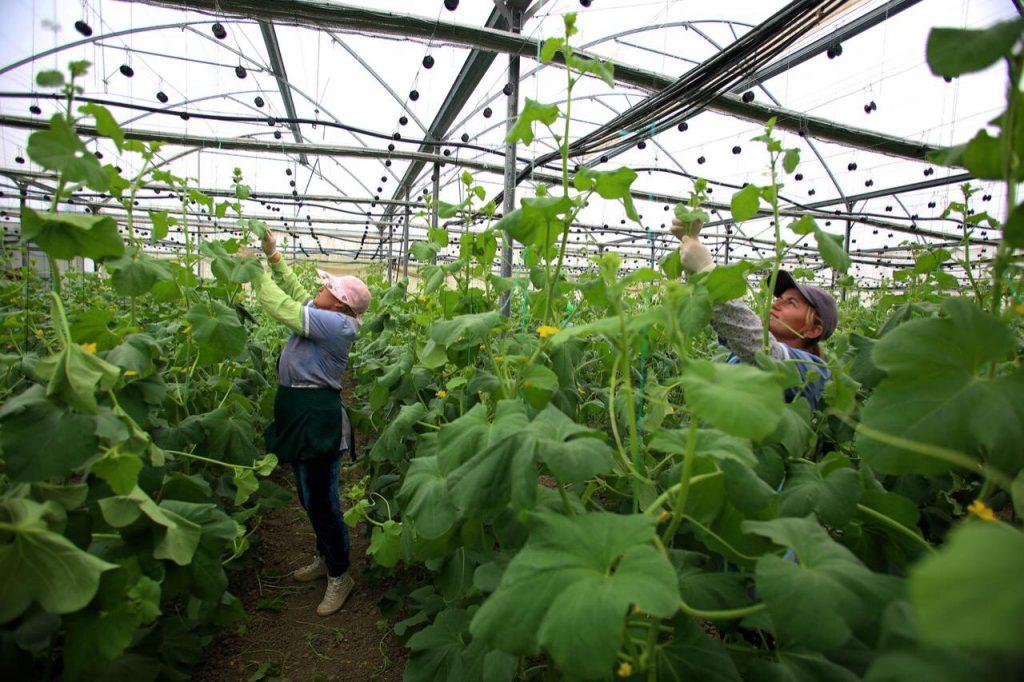 Në e-Albania, aplikim online për skemën e mbështetjes për fermerët